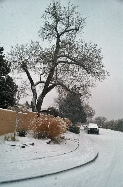 snow in Abq New Year's Day